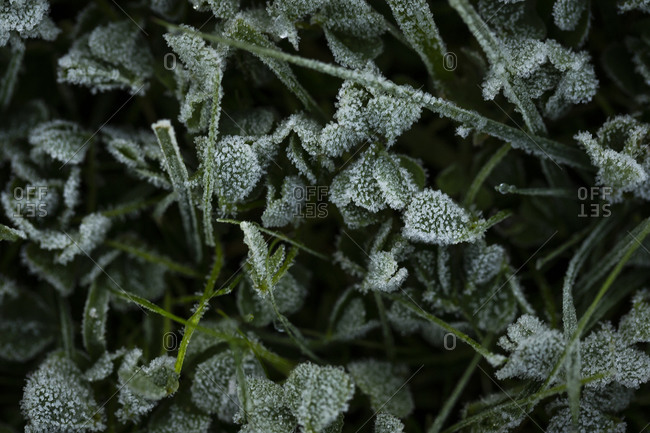 Close up of frost covered grass and plants in early spring