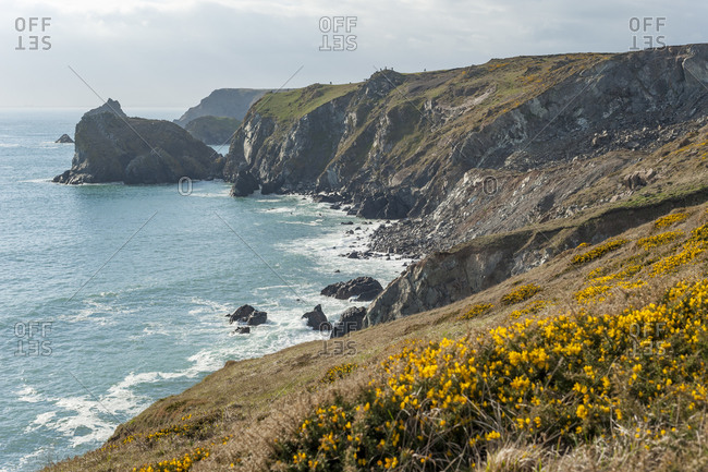 Cornish coastline near Kynance Cove on the Lizard Peninsula in the British Isles
