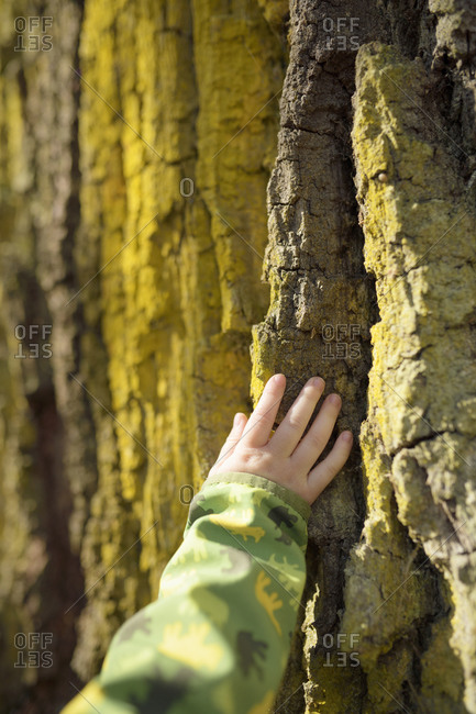 Toddler's hand touching tree bark
