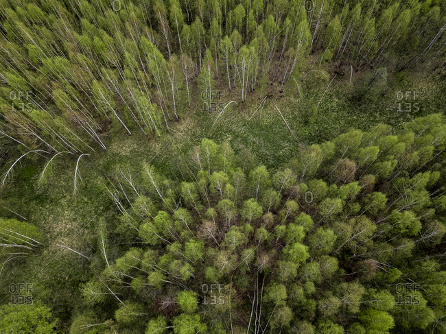 Russia- Moscow Oblast- Aerial view of clearing in green coniferous forest