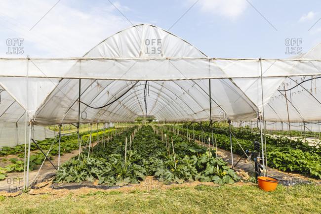 Organic farming- greenhouse with net