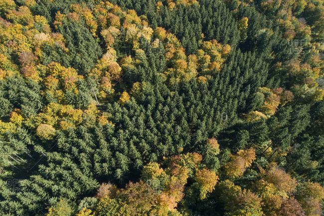 Germany- Baden-Wurttemberg- Heidenheim an der Brenz- Drone view of autumn forest in Swabian Jura