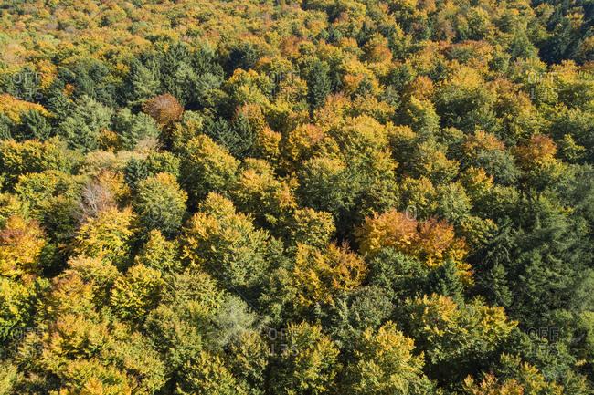 Germany- Baden-Wurttemberg-HeidenheimanderBrenz- Drone view of autumn forest inSwabian Jura