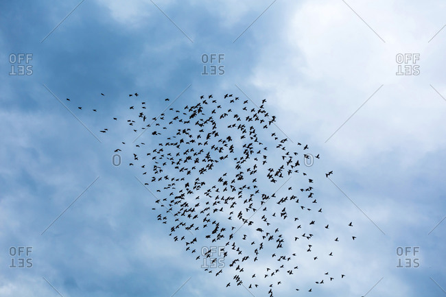 Georgia- Low angle view of flock of birds flying against sky