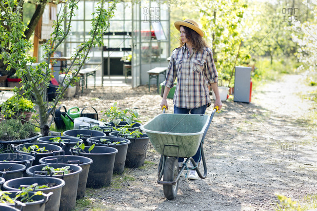 Full length of mature woman walking while pushing wheelbarrow by plants at community garden