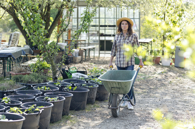 Portrait of confident mature woman walking while pushing wheelbarrow by plants at community garden
