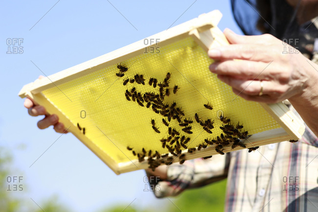 Midsection of woman holding beehive on sunny day