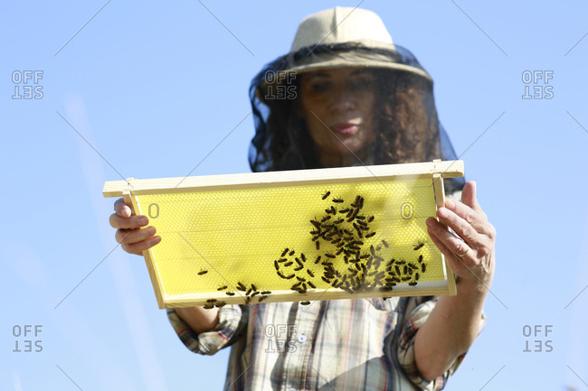 Low angle view of female beekeeper holding beehive against blue sky
