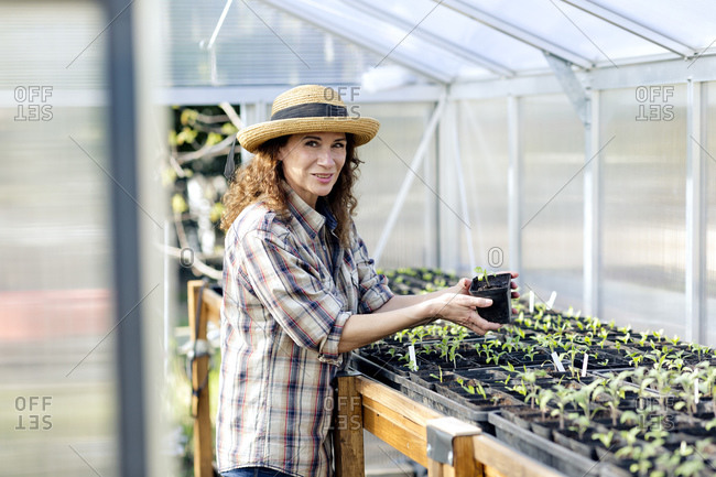 Portrait of confident mature woman holding plant at greenhouse