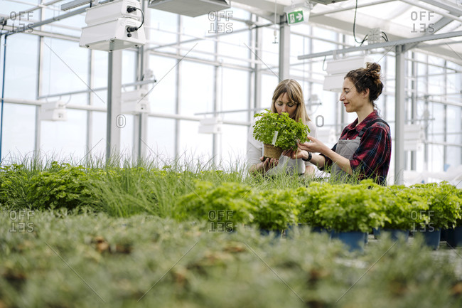 Gardener and businesswoman with parsley plant in greenhouse of a gardening shop