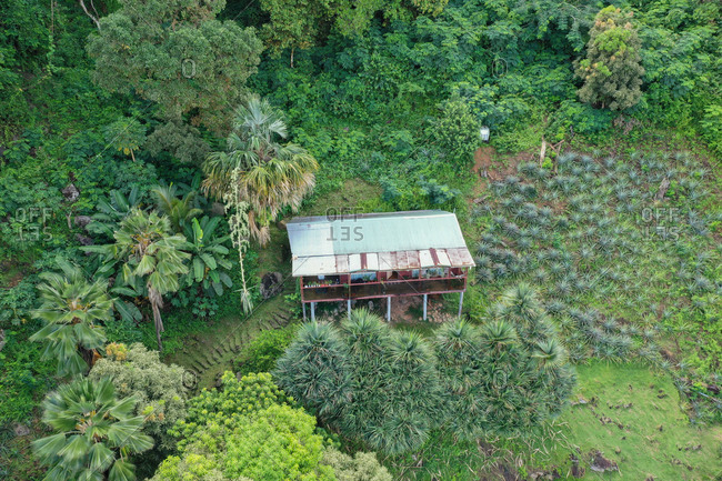 Aerial view of an isolated house surrounded by fruit trees, MahE, Seychelles
