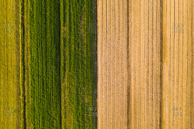 Aerial view above of plantation field rows, Croatia.
