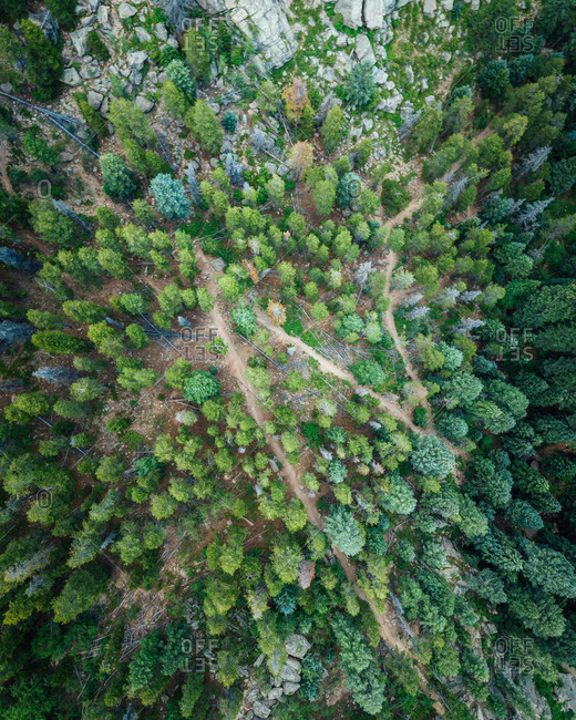 Aerial view of a pine forest at Maxwell Falls in Shadow Mountain, Colorado, United States