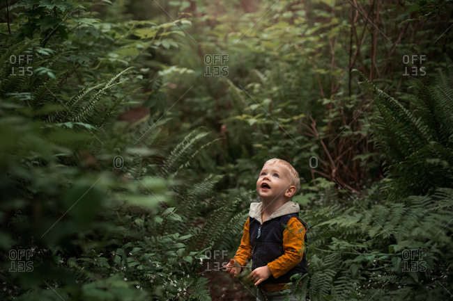 Little boy surrounded by ferns looking up in the forest