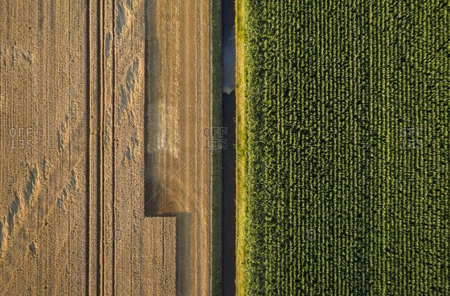 Grainfield partly harvested, Sint Philipsland, Zeeland, Netherlands