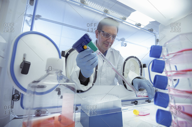 Scientist pipetting liquid in an anaerobic cabinet in laboratory