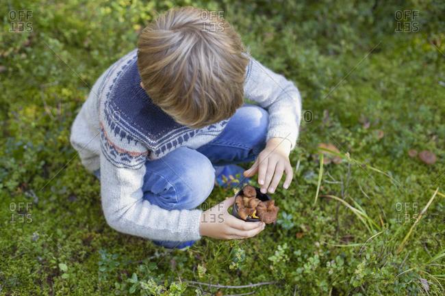 Boy picking up wild mushrooms in forest