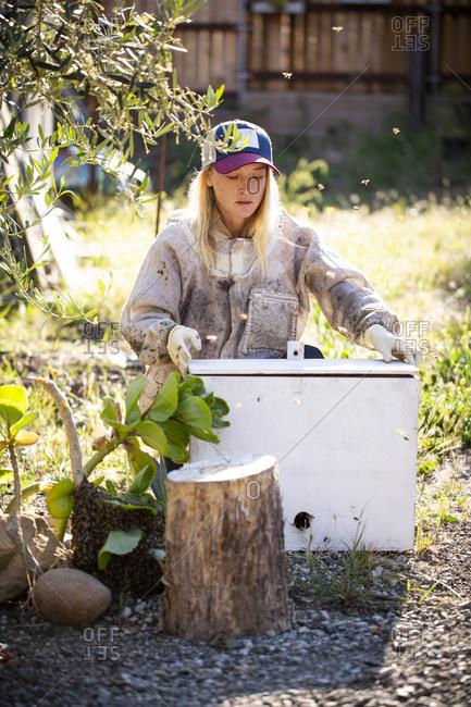 Female beekeeper working in apiary