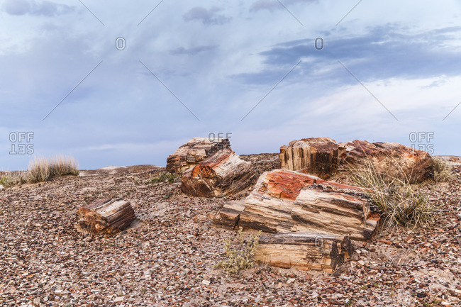 Petrified Forest National Park, Petrified Forest, Historic Route 66, Arizona, USA
