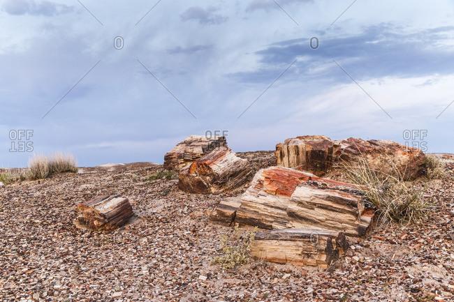 Petrified Forest National Park, Petrified Forest, Historic Route 66, Arizona, USA