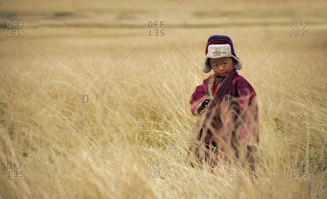 Tibetan child plays on the meadows of the Tibetan plateau during the last harvest days before the first snow storms begin
