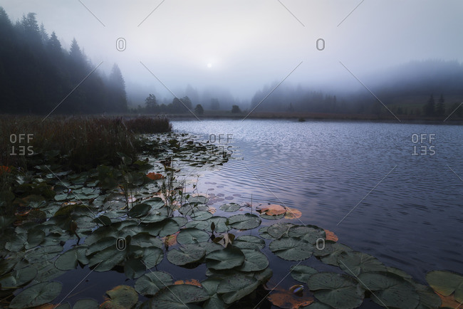 Geroldsee in the morning mist, Krun, Mittenwald, Karwendel, Bavaria, Germany