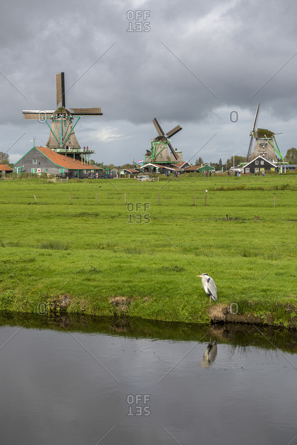 January 1, 1970: Windmills in Zaanse Schans, Zaanstad municipality, Holland, Netherlands