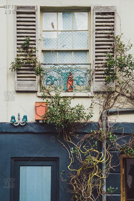 Overgrown window facade, Brighton, England