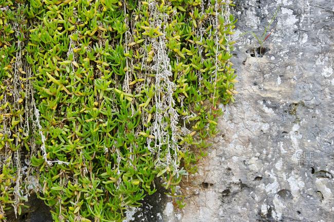 Climbers on stone wall, Cala Figuera, Mallorca, Balearic Islands, Spain, Europe