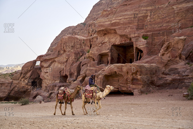 Petra, Jordan - March 24, 2019: Young Bedouin man riding a camel among the ruins at sunrise