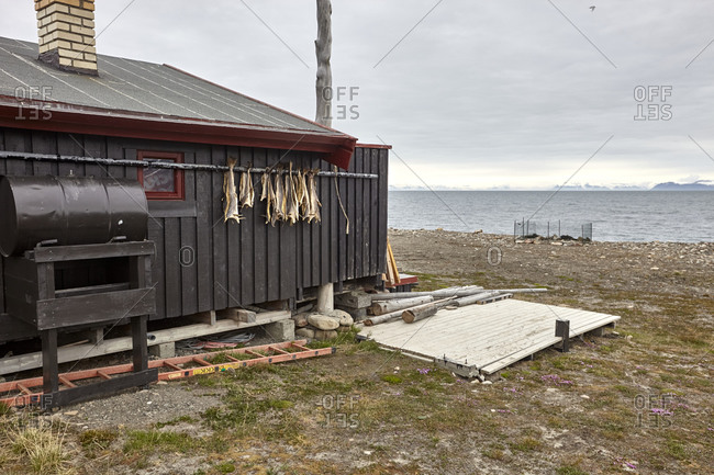 Spitsbergen, Svalbard, Norway - June 28, 2014: Dry fish on a wall of a fishing hut on the shore of Adventfjorden, a bay of Isfjorden
