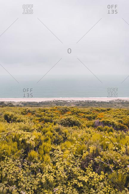 Coastal landscape in Nazare- Portugal