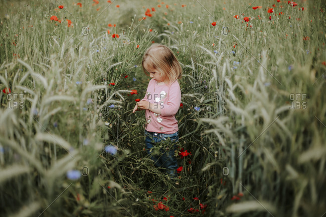 Little girl standing on a field with poppies and wheat