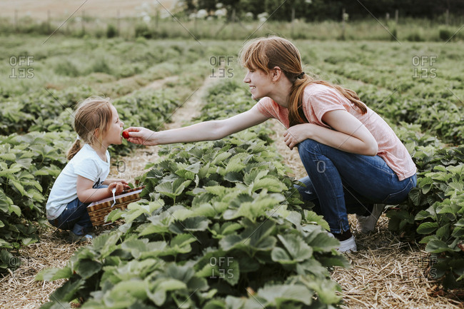 Mother giving her daughter a strawberry on field