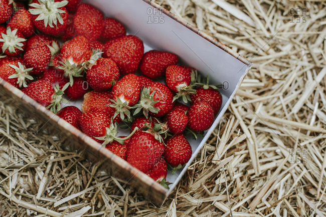 Ripe strawberries in basket on field