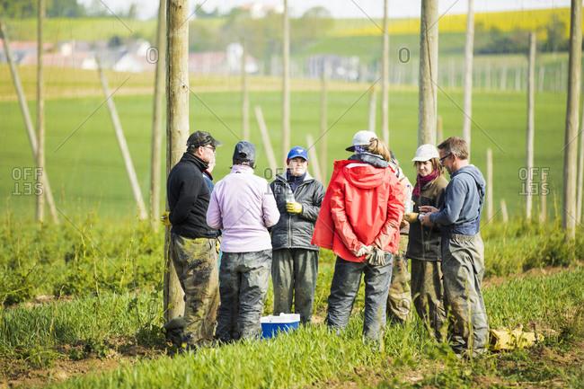 Male and female farmers standing on hop crop field at Hallertau- Bavaria- Germany
