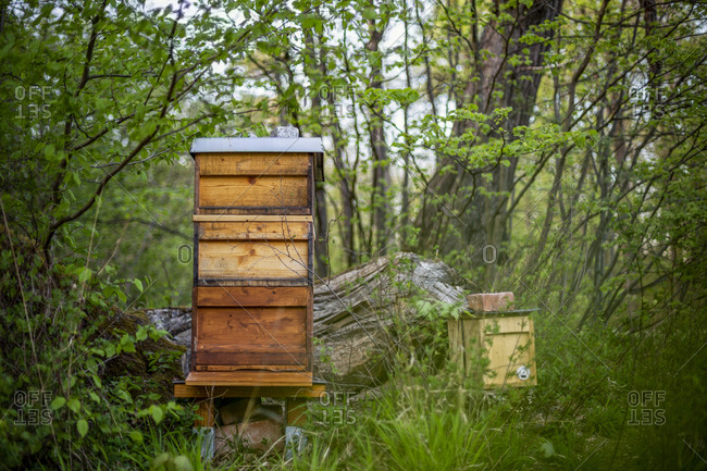 Germany- Bavaria- Munich- Beehives in forest apiary