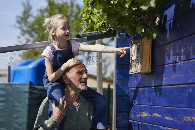 Grandfather and granddaughter inspecting bee hotel in allotment garden