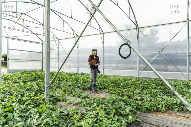Farm worker woman checking the growth of organic melon seedlings in greenhouse