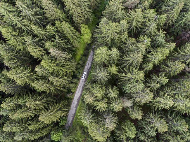Car driving through a lush green forest