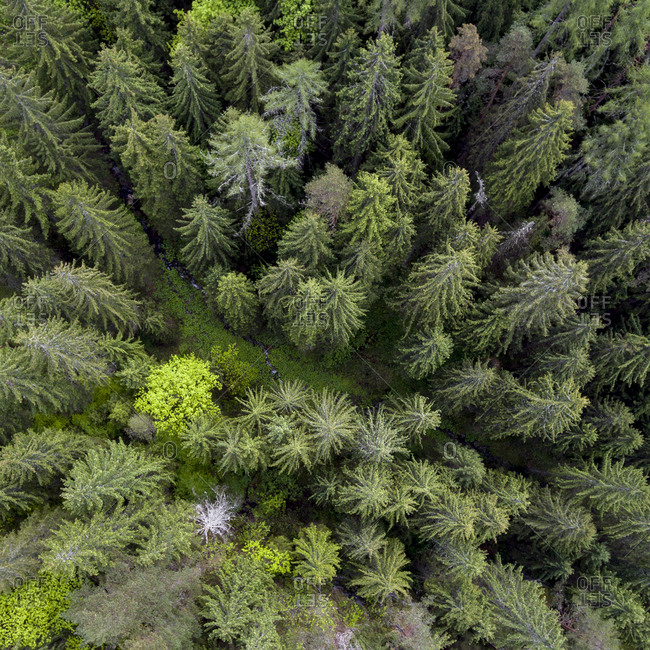 Bird's eye view of a green trees in a forest in the springtime