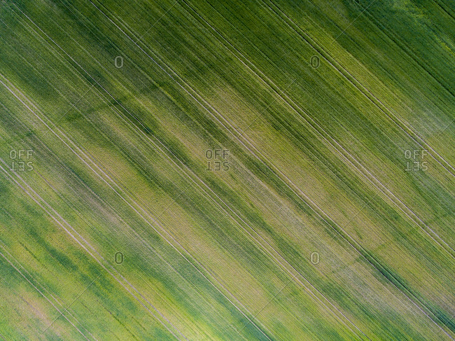 Bird's eye view of green agricultural fields