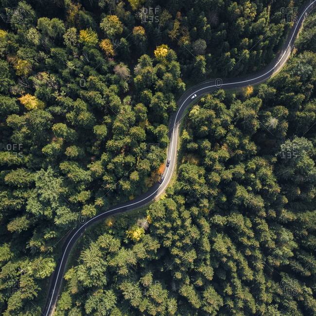 Winding road through a dense forest