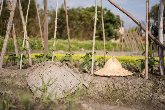 Oriental conical hat and wicker tray on dry soil among fresh green plants cultivated on farm in Taiwan