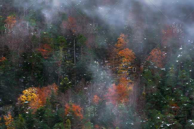 Aerial landscape of dense forest with colorful trees and snow covered with fog in autumn day in mountainous region