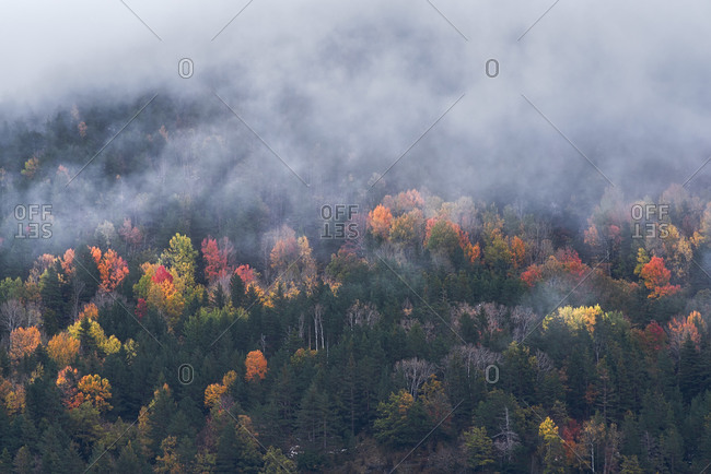 Picturesque drone view of mountain slope covered with colorful trees and snow in autumn day between fog
