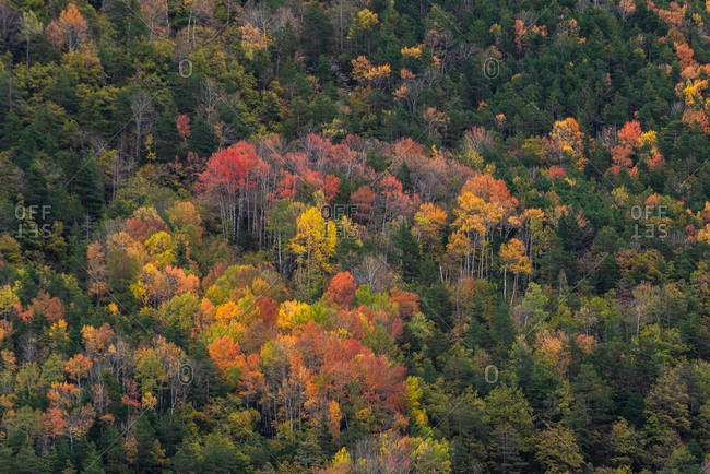 Picturesque drone view of mountain slope covered with colorful trees and snow in autumn day