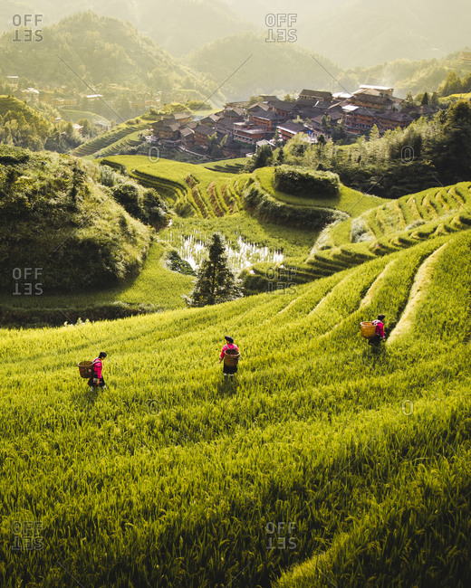 From above of rice terraces with green plants and workers with small city under fog on slope of hill in Longsheng
