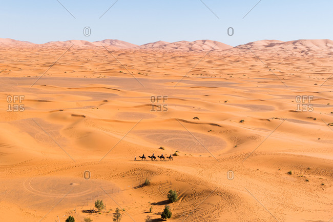 Drone view of spectacular scenery of desert with sand dunes and camel caravan on sunny day in Morocco