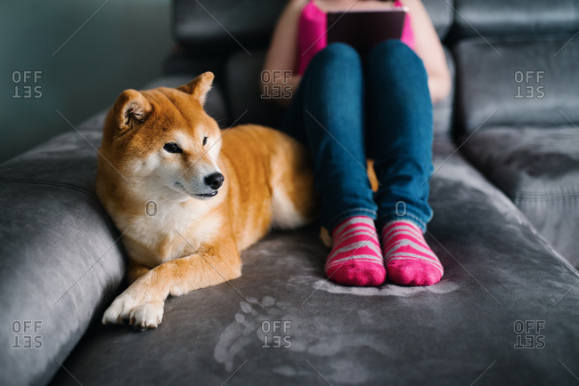 Cropped unrecognizable female in casual outfit surfing tablet while sitting on cozy plush couch with and hugging cute Shiba Inu dog during free time at weekend day in cozy living room